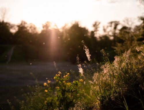 If It Feels Like Your Seasonal Allergies Get Worse Each Year, You Might Not Be Wrong (But We Can Help)